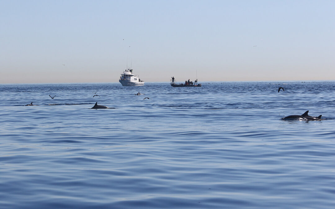Tagless Behavioral and Physiological Response Study (BPRS) Kicks Off in Channel Islands